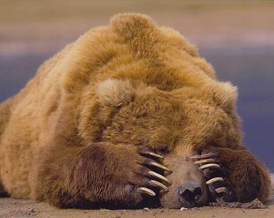 C'est un autre type d'histoire d'ours ça… Les autorités canadiennes se voilent la face.