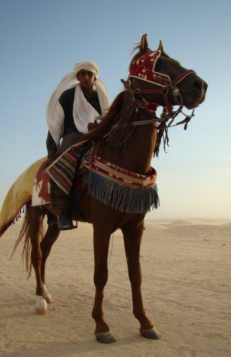 Cavalier bédouin de Tunisie