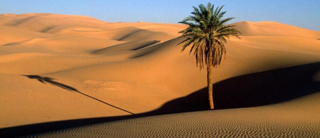 Dans la tradition coranique, Marie accouche du messie Îsâ (Jésus) seule dans le désert, sous un palmier solitaire