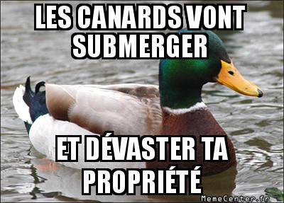 actual-advice-mallard-les-canards-vont-submerger-et-devaster-ta-propriete