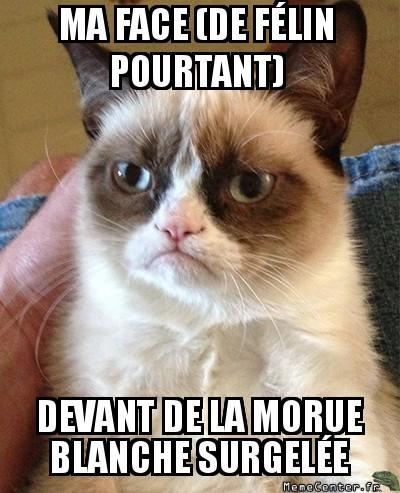 grumpy-cat-ma-face-de-felin-pourtant-devant-de-la-morue-blanche-surgelee