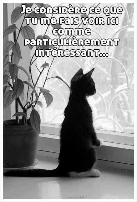 interessant-petit-chat-Rottenecards_39192048_sy55qqxjbz