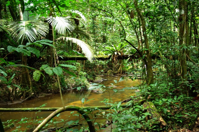 Jungle-de-Guyane