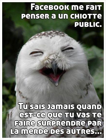 Facebook-chiotte-Rottenecards_24287668_mdkqq3z43n