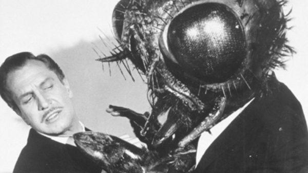 Discussion avec une mouche